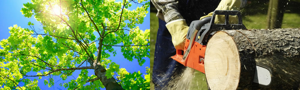 Tree Services Bath